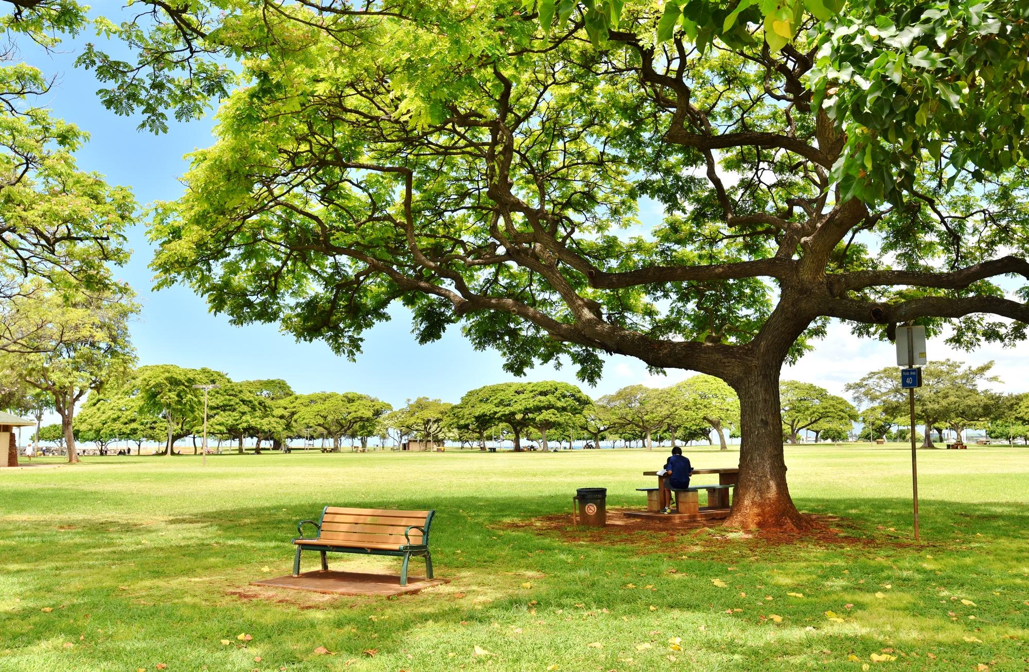 ハワイの卵子提供 体験談